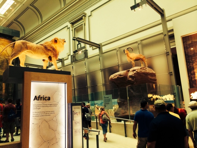 Museo de Historia Natural Washington D.C.
