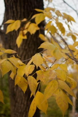 Hojas de otoño en Central Park, Nueva York