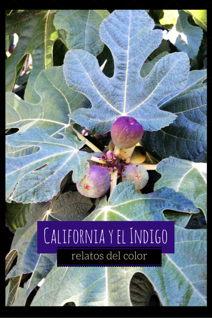 California y el indigo, relatos del color portada