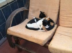 gaticos con frio en Bolivia