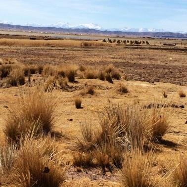 vegetacion Bolivia