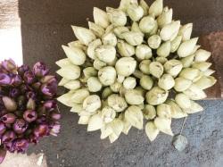 racimos de flores de loto