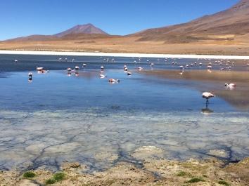 desierto de sal de Uyuni lagunas Bolivia flamingos