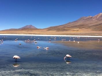 desierto de sal de Uyuni Bolivia flamingos lagunas