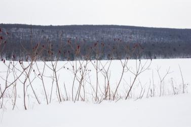 Vista caminando con raquetas de nieve