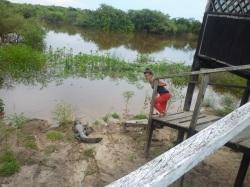 amazonia bolivia cocodrilo