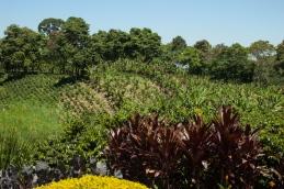 Zona cafetera, Colombia - Más información en este blog: http://ow.ly/N3aap