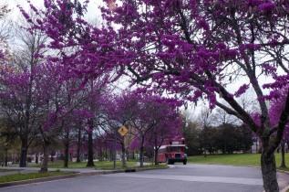Nashville Parque Capitolio