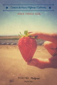 Campos de fresa y Highway 1 California, artículo Desarrollo Peregrino blog de viajes