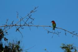 Atardecer Parque Nacional Yala