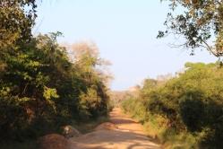 Camino Parque Nacional Yala