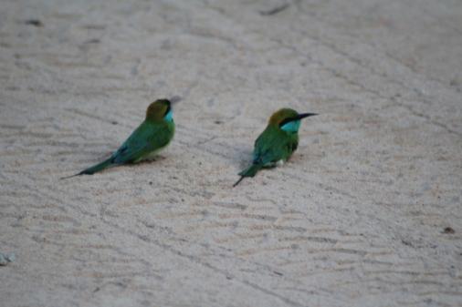 Aves en el Parque Nacional Yala