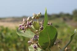 Flora en el Parque Nacional Yala