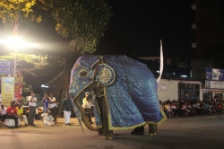Elefante en el Perahera