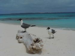 Aves y los roques