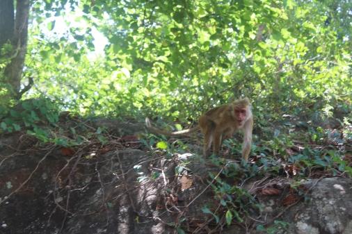 Monos en los jardines