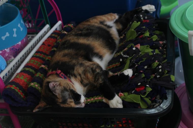 Las mascotas del mercado támbien tomaban una siesta