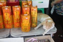 Gato en Chinatown
