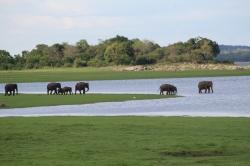 la reunion de elefantes