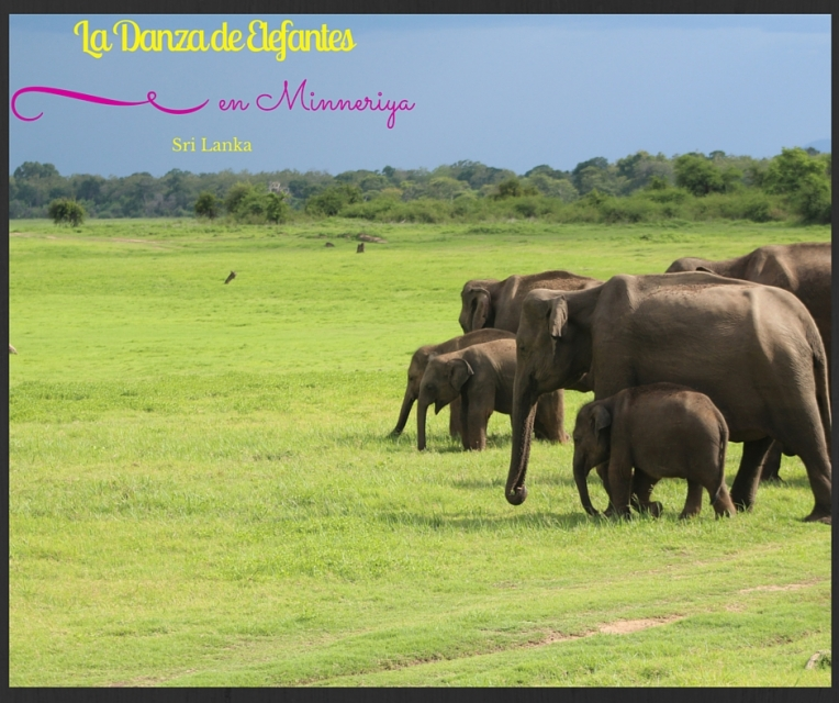 La Danza de Elefantes