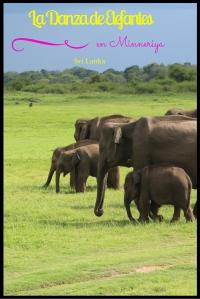 La Danza de Elefantes(2)