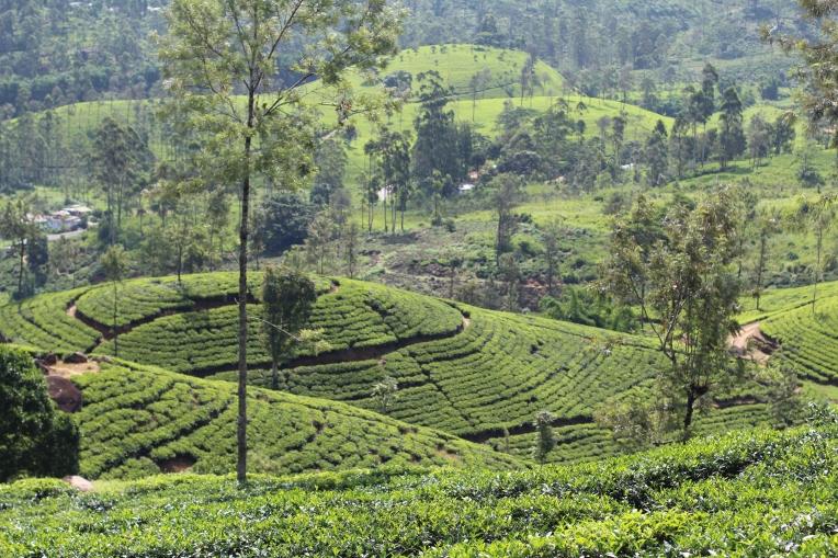 Plantaciones de té Sri Lanka Hill Country