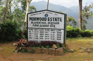 Anuncio de Worwood State Tea Country Sri Lanka