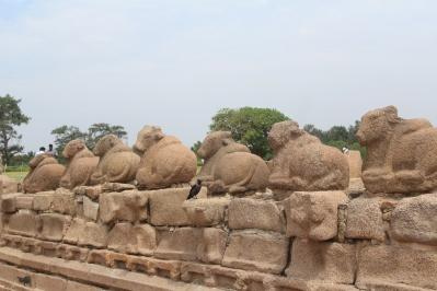 Estatuas de Vacas en Templo en la Orilla Mahabalipuram Chennai Tamil Nadu India
