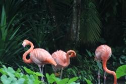 Flamingos rosados en el zoológico de Singapur