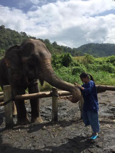 visitando-elefantes-asiaticos-en-tailandia