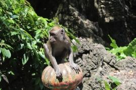 Mono en las cuevas Batu