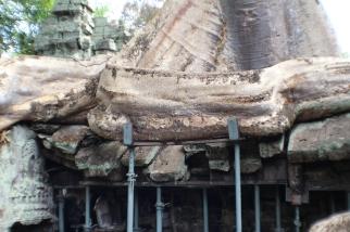 Estructuras para sostener los àrboles en las ruinas de Angkor