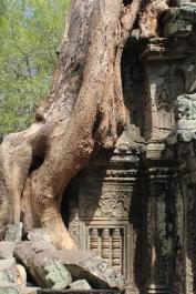 La naturaleza se impone y domina en en templo Ta Phrom