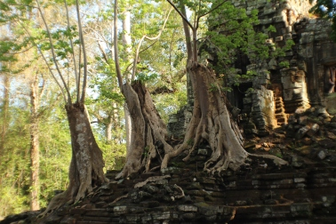 Árboles cortados sobre las ruinas, vemos como si nada volvieron a crecer.