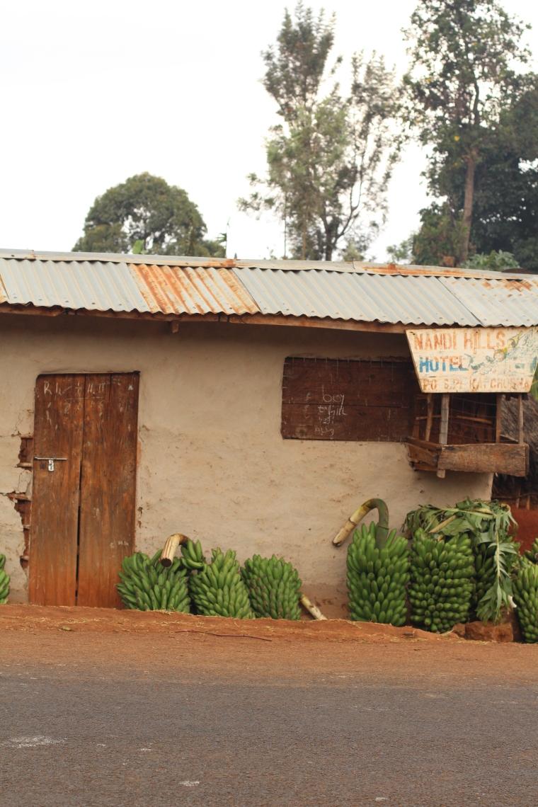 Matooke (topocho)-Plátano y principal comida en Uganda